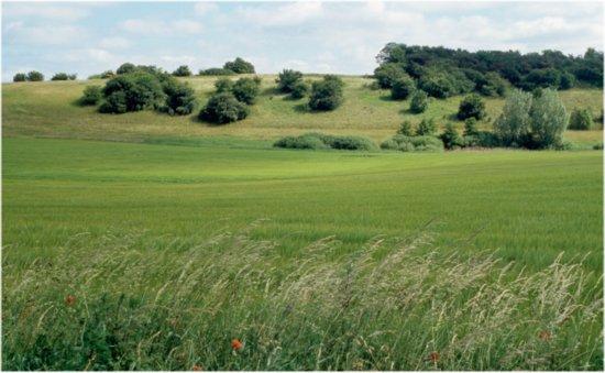 Mere økologi – men endnu ingen økologisk landbrugsuddannelse?